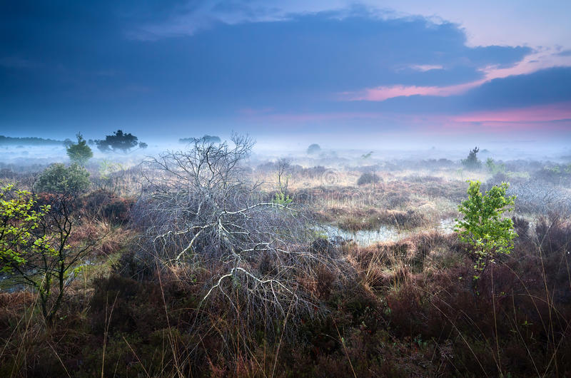 Download Dead Fallen Tree On Swamp In Misty Sunset Royalty Free Stock Photos - Image: 31427918