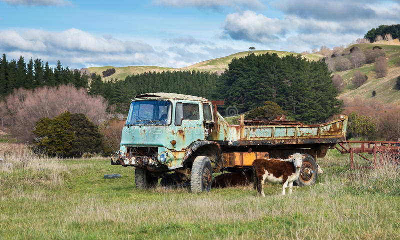 Dead Farm Truck. One very old and dead looking farm truck with a young cattle in front of it stock photos