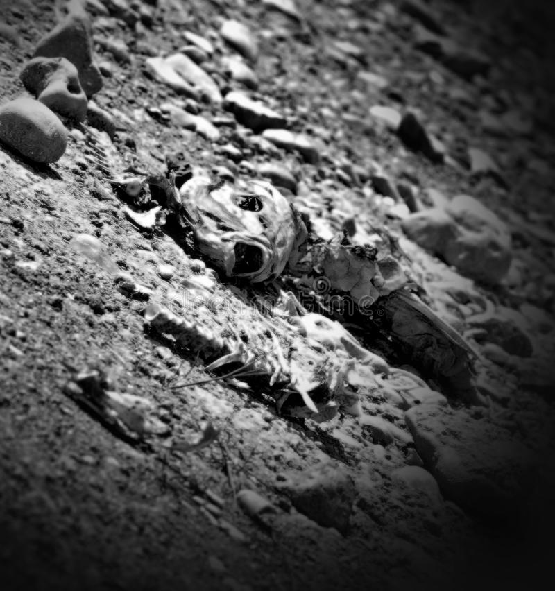 Download Dead Fish Drought Tom Green County Texas Editorial Stock Image - Image: 27593164