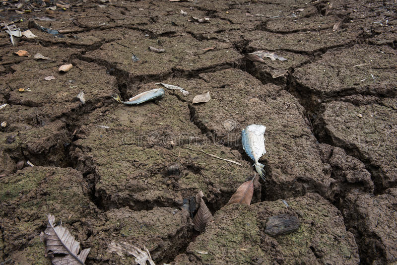 Dead fish, dry land, World Disaster, Cracked ground background stock photography