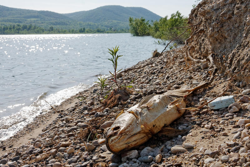 Download Dead Fish On The Ground Royalty Free Stock Images - Image: 34351639