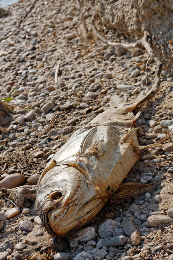 Download Dead Fish On The Ground Stock Photo - Image: 34351650