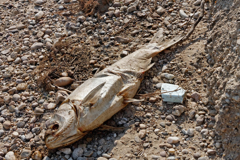 Download Dead fish on the ground stock photo. Image of disaster - 34351654