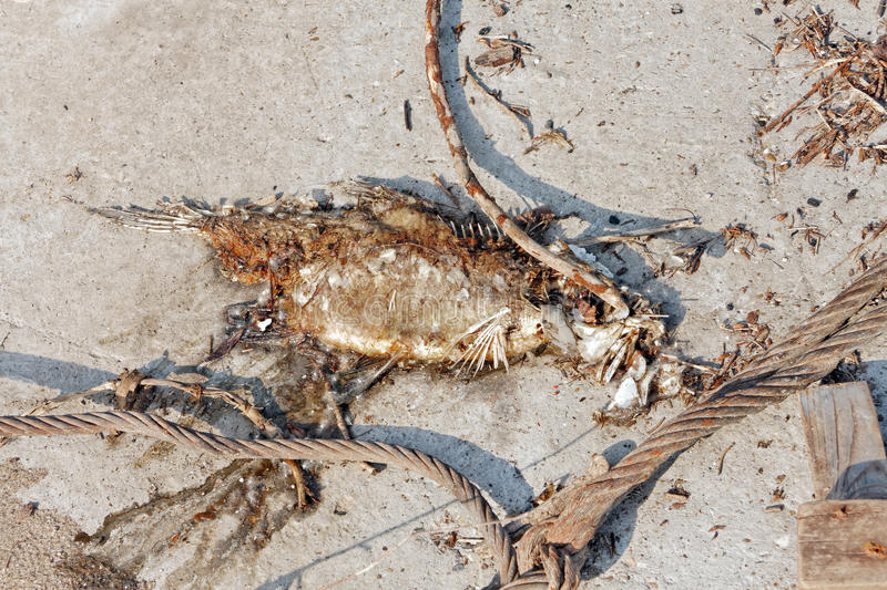 Download Dead fish on the ground stock photo. Image of natural - 34351744