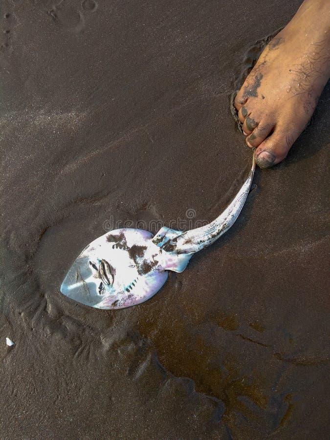 A Dead fish on the beach. royalty free stock photos