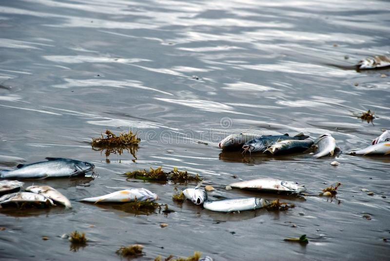 Dead fishes on beach II stock photos
