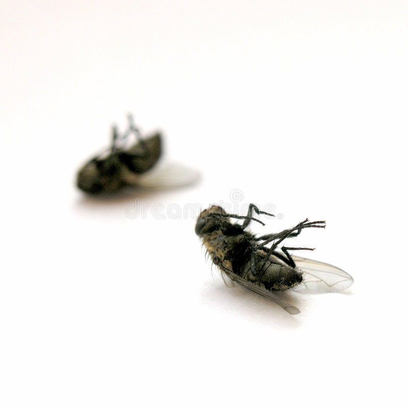 Dead flies. Couple of dead flies on my window sill royalty free stock images