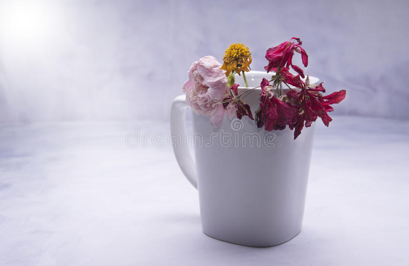 Dead flowers. In the cup on the grungy background stock image