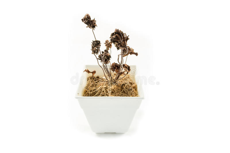 Dead flowers royalty free stock photos