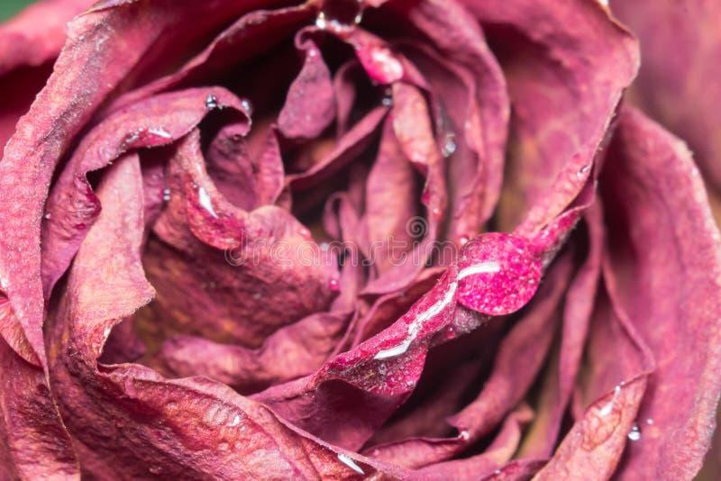 Dead flowers macro stock images