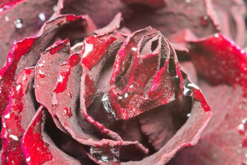 Dead flowers macro royalty free stock image