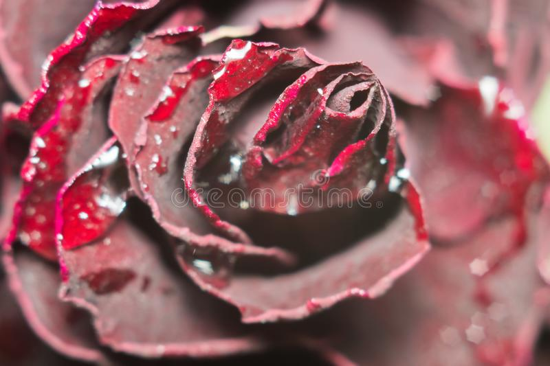 Dead flowers macro royalty free stock images