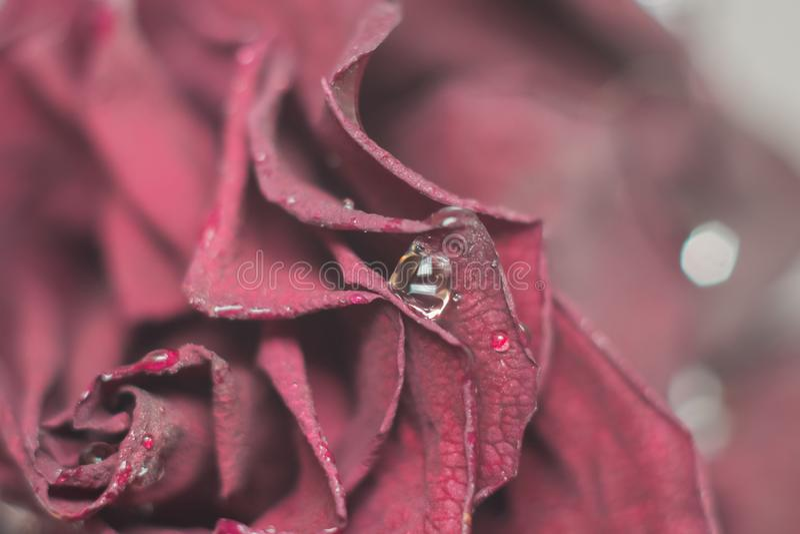 Dead flowers macro stock photo