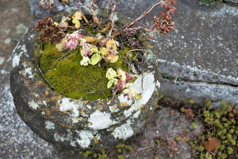 Dead flowers in the pot. On the cemetery royalty free stock photography