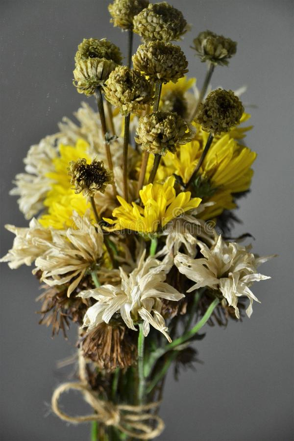 Dead Flowers. Dead reflective flowers on a mirror stock photography