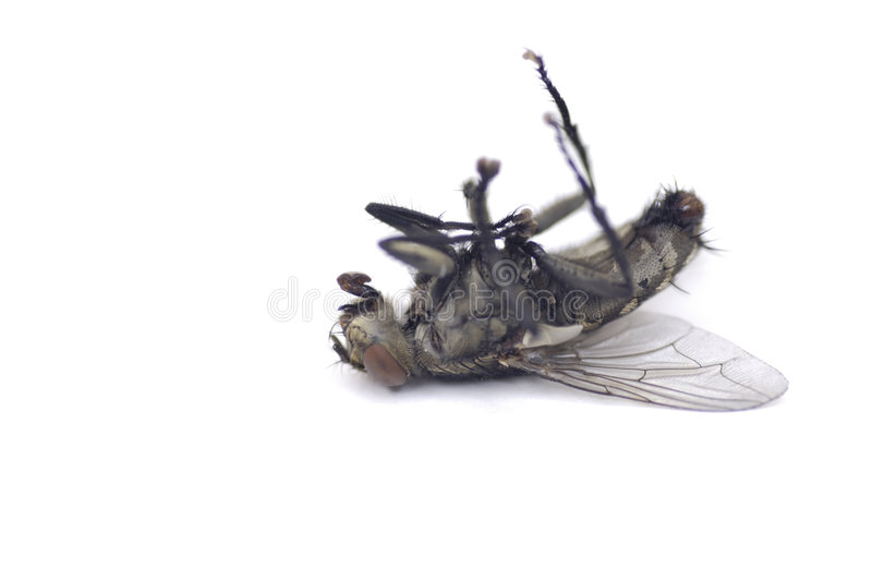 Dead Fly 3 stock images