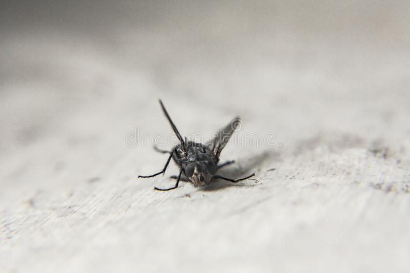 Dead fly detail royalty free stock images