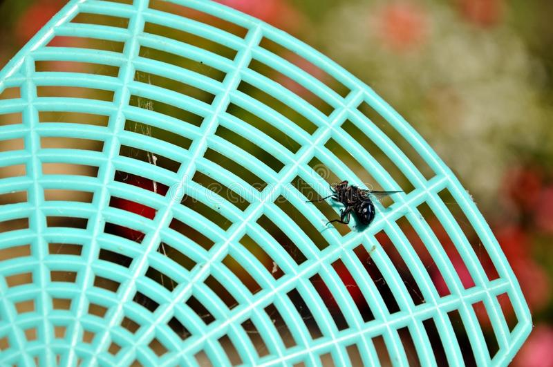 Dead fly on a flyswatter stock photos
