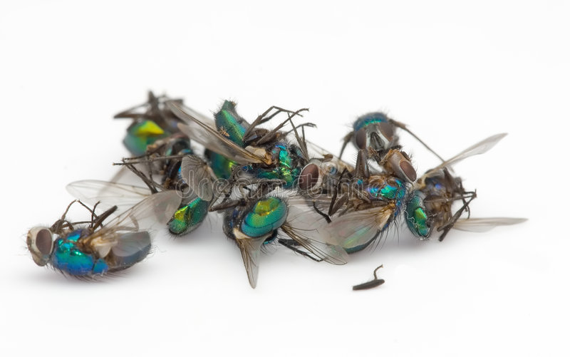 Dead fly pile stock photography