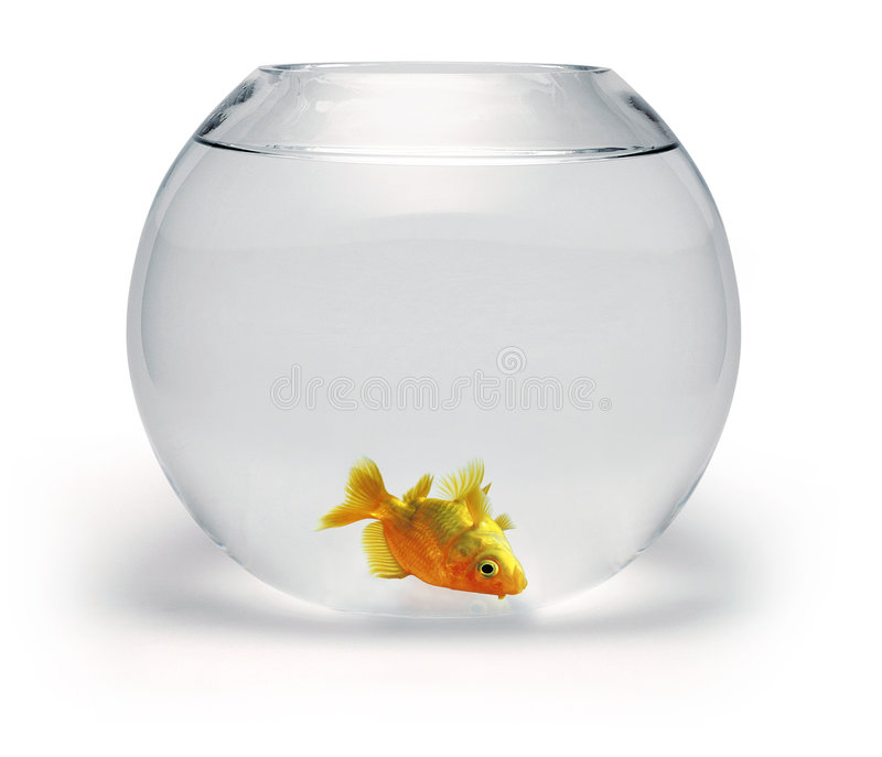 Dead Goldfish Bowl royalty free stock photos