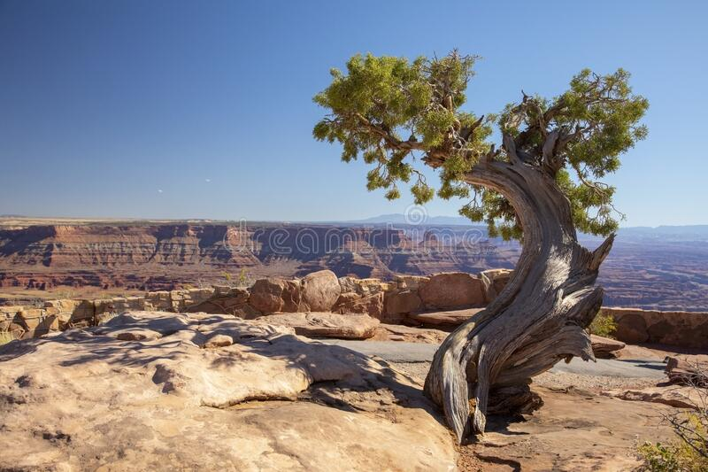 Dead Horse Point State Park stock images