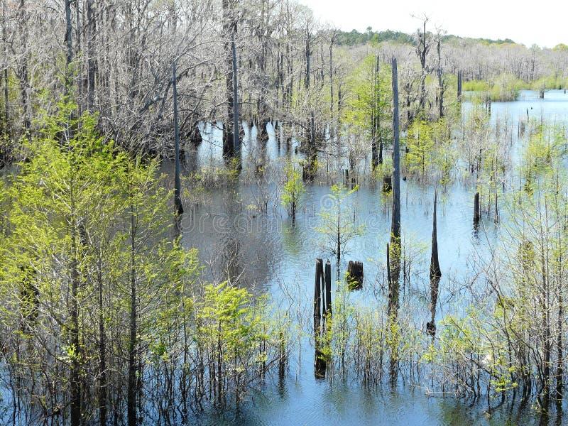 Dead Lakes in Wewahitchka, Florida royalty free stock photos