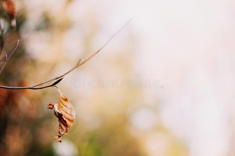 Dead Leaf Bokeh Background Autumn stock photo