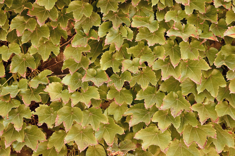 Dead leaves royalty free stock photography