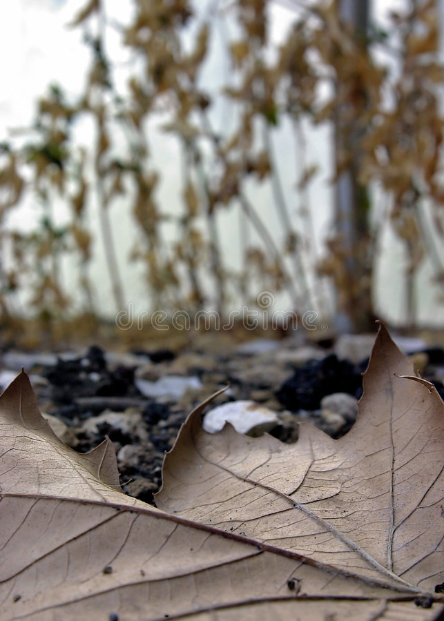 Free Dead Leaves And The Dirty Ground Stock Photo - 257290