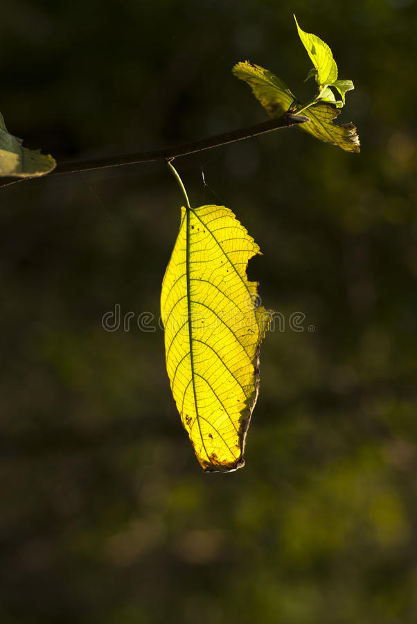 Dead leaves stock photo