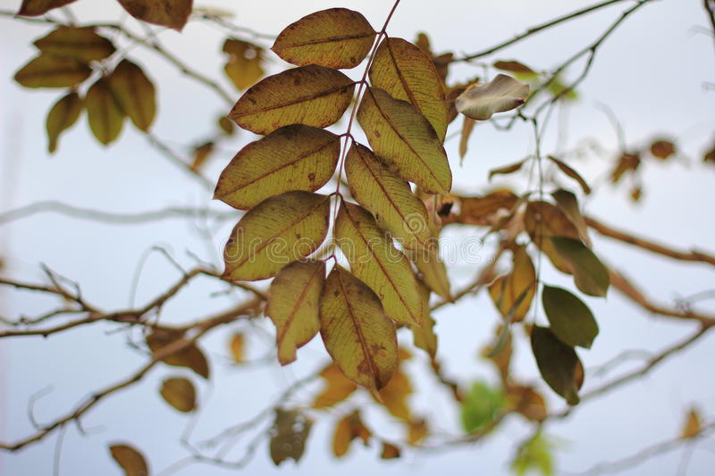 Download Dead Leaves And Branch Tree Stock Photo - Image: 83723948