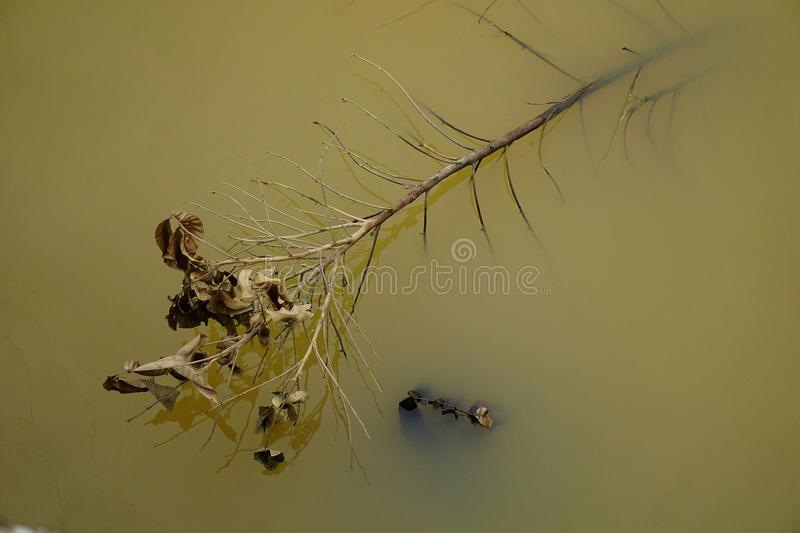 Dead leaves ... because of time Take everything from us. royalty free stock photos