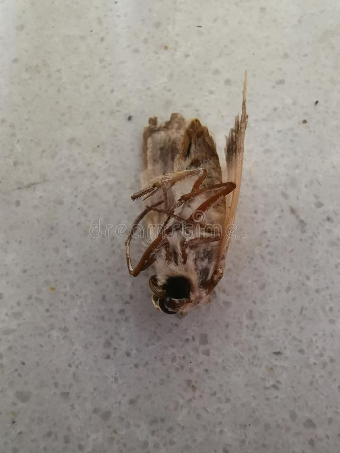 Dead moth insect stock photo
