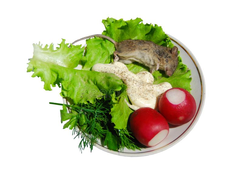 Dead mouse on a porcelain dish with radishes, dill, lettuce and sauce. Isolated on white stock photos