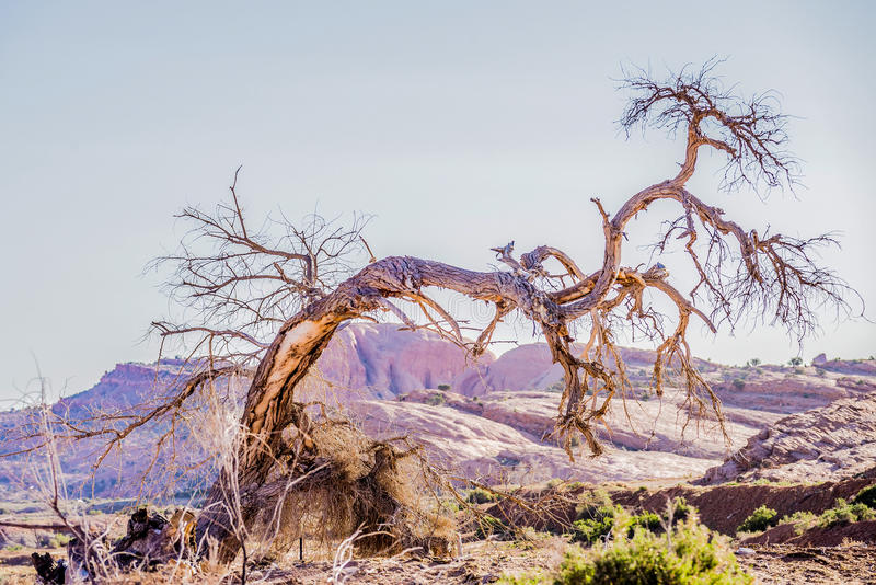 Dead old tree near monument valley arizona stock photo