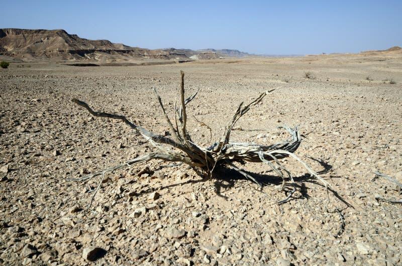 dead-plant-desert-26282243.jpg