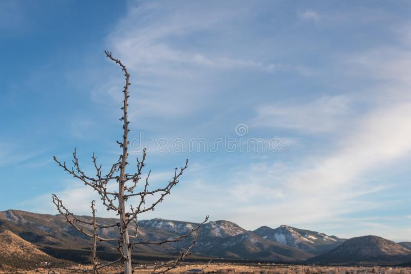 Dead plant foreground before snow mountain range, American Southwest desert winter. Selective focus, copy space, horizontal aspect stock photo
