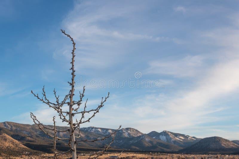 Dead plant foreground before snow mountain range, American Southwest desert winter. Selective focus, copy space, horizontal aspect stock photos