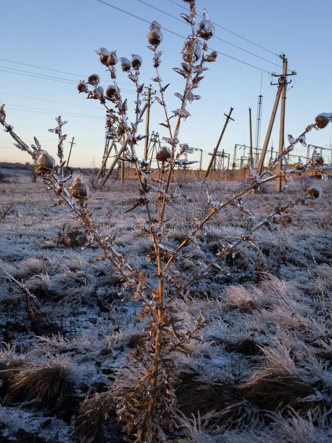 Dead plant on the winter field. Electricity power lines on the background royalty free stock images