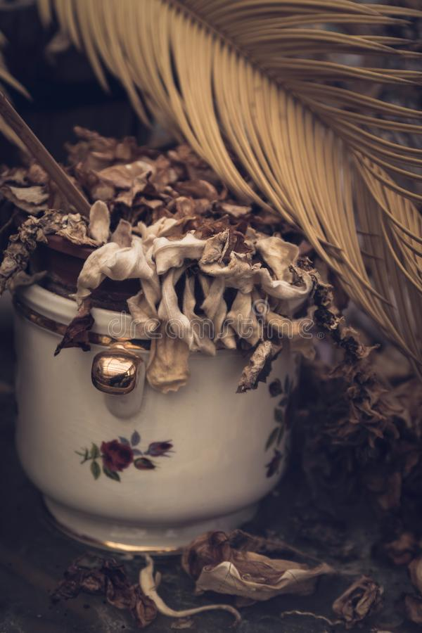 Dead plant in vintage flower pot stock images