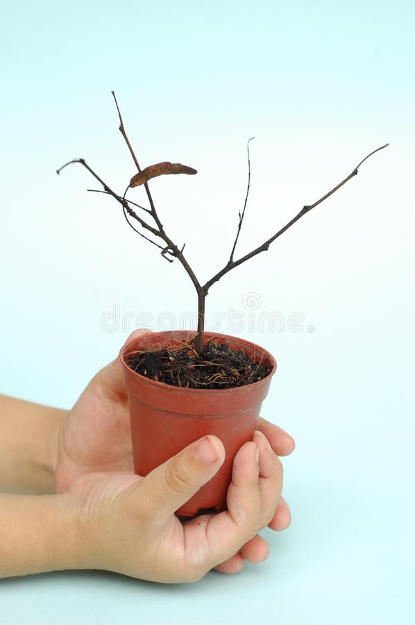 Dead potted plant. Metaphor of bad investment stock photo