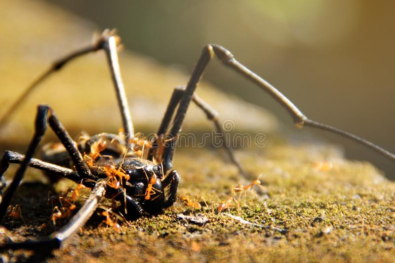 Dead spider royalty free stock image