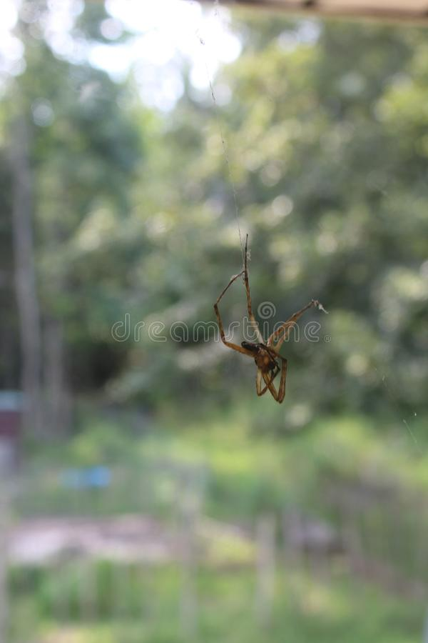 Dead spider hanging from eaves stock photo