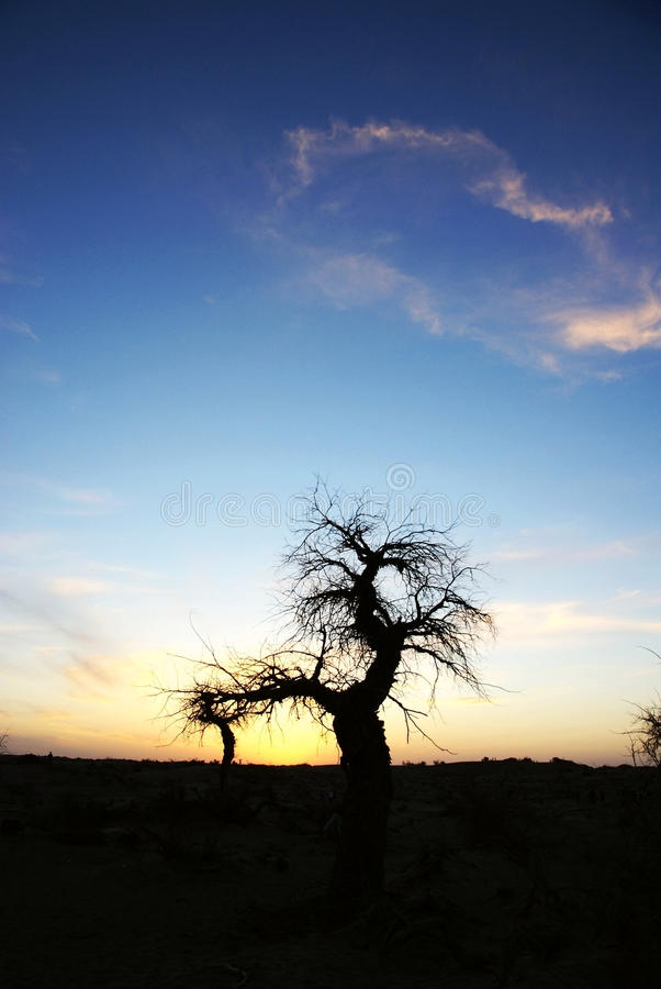 Download Dead Standing Tree In Sunset Stock Photo - Image: 16509282