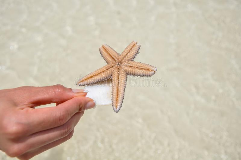 Dead starfish found in the ocean at Isla Holbox. Mexico royalty free stock image