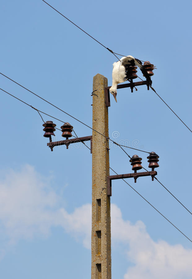 Download Dead Stork  On Electricity Wires Stock Image - Image: 21364301