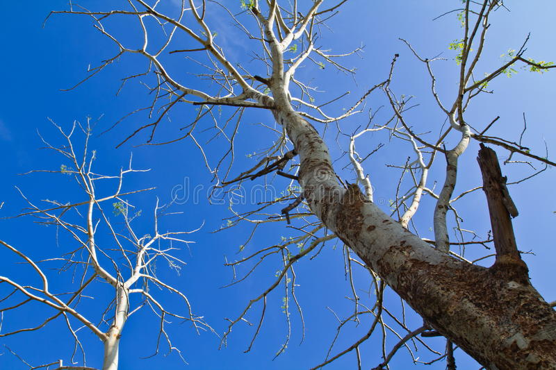 Download Dead tree stock image. Image of outdoor, lifeless, botany - 19733301