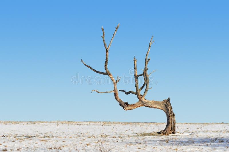 Download Dead Tree stock image. Image of barren, nature, horizontal - 23580999