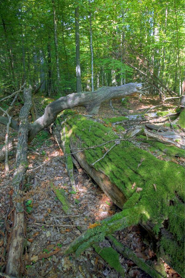 Dead tree 3 royalty free stock photography