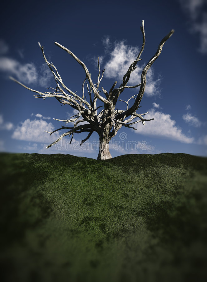 Free Dead Tree 8 Stock Photo - 2717260